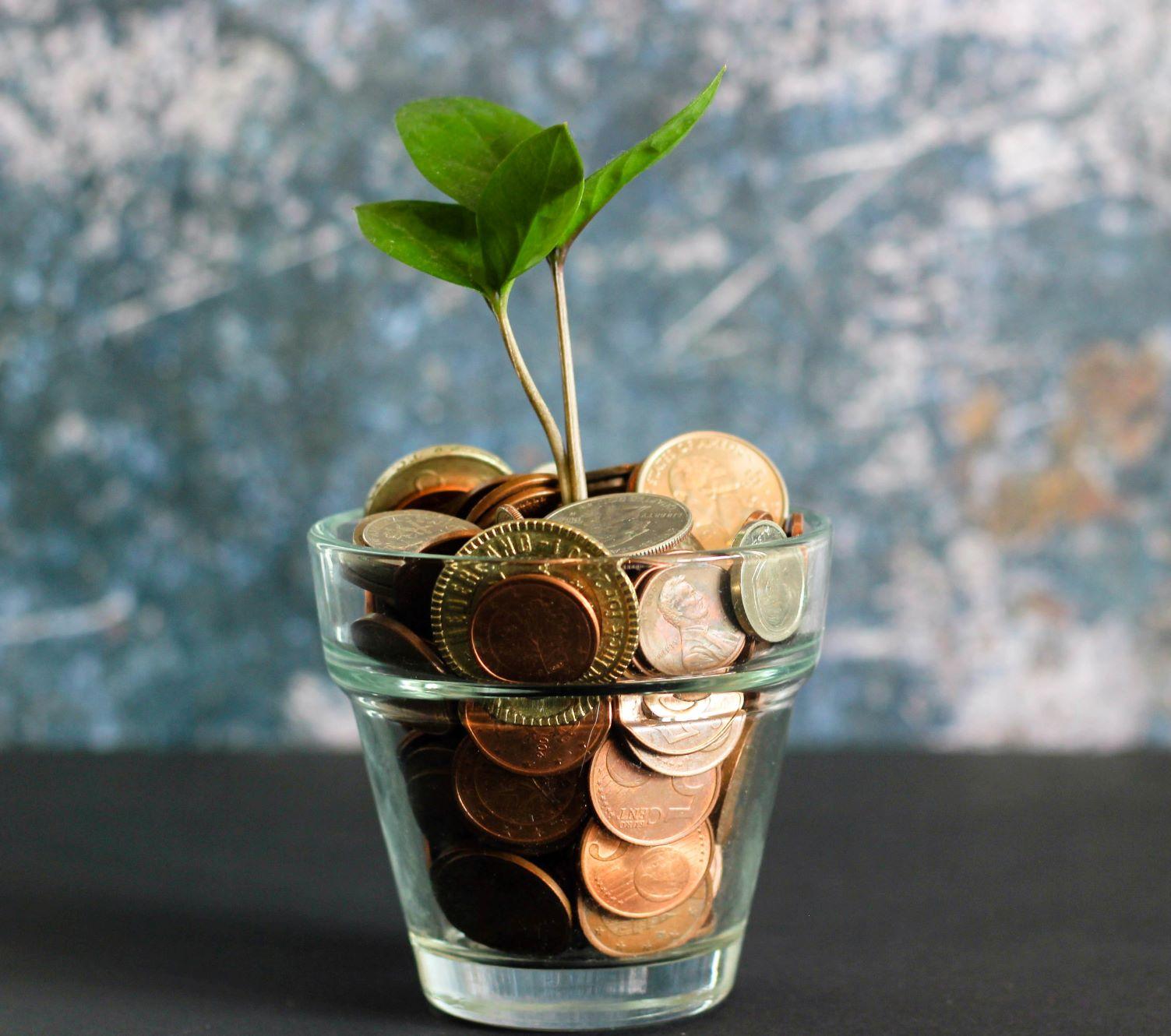 Keimling aus dem mit Münzen befüllten Töpfchen
